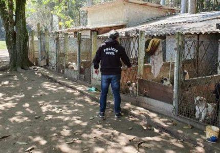 Audiência pública na Alep debate regras para comércio de cães e gatos no Paraná